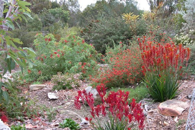 Australian Native Garden Design Ideas Google Search My Dream