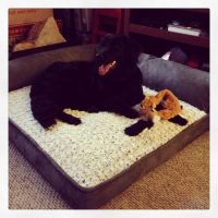 Costco dog bed | Home | Pinterest | Beds, Costco and Dog beds
