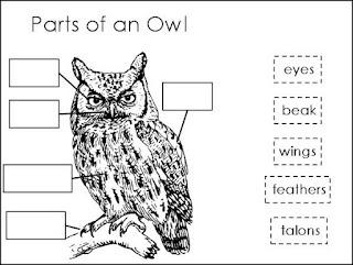 Owl moon and Owl on Pinterest