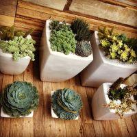 Garden idea for porches, decks, a balcony, indoor spaces ...