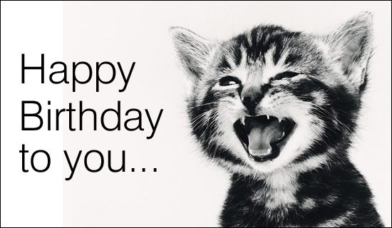 Happy Birthday To You Singing Cat Birthday ECards