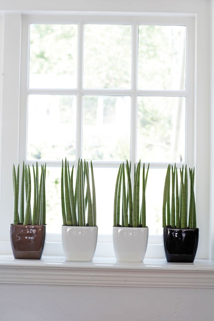 25 beste ideen over Venster Planten op Pinterest