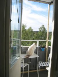 163 best images about Cat Enclosures on Pinterest | Cats ...