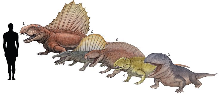 1000 Images About Dinosaurus And Prehistoric Creatures On