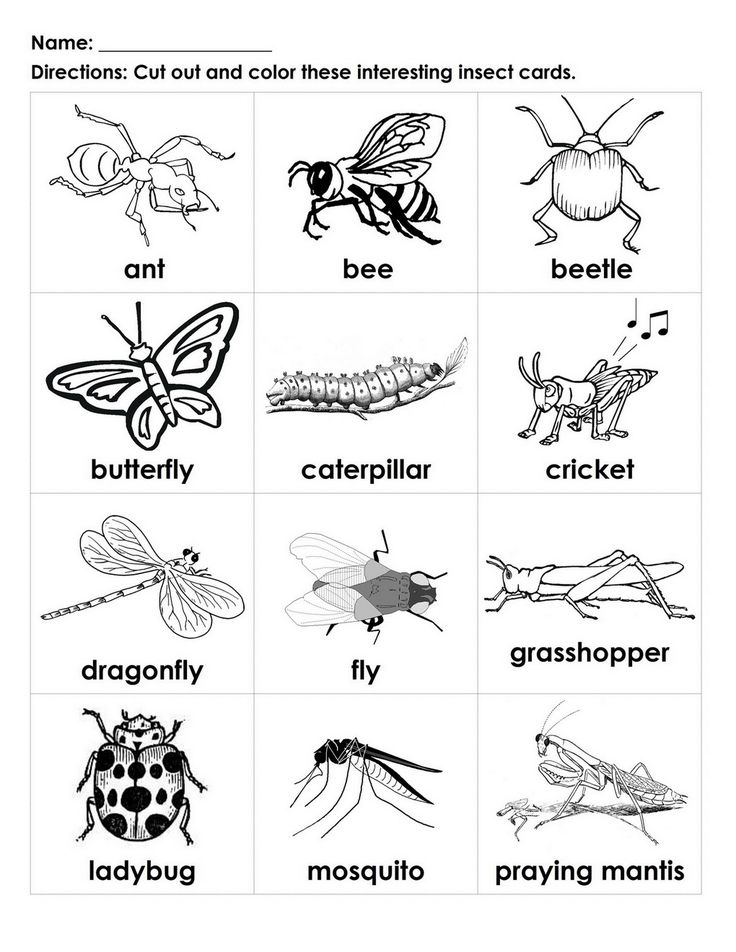 Insects, For kids and Cards on Pinterest