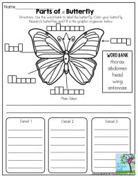 Life Cycle Of A Butterfly Worksheet 2nd Grade | www.imgkid ...