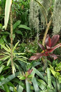 78 Best images about Tropical gardens in temperate ...