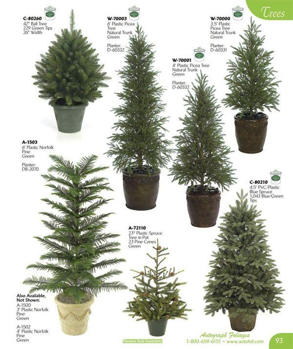 evergreen tree chart school stuff