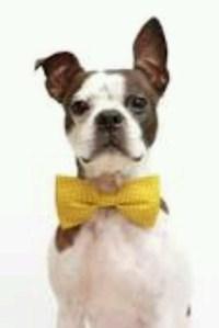 DIY Loose Seal dog costume   Ideas   Pinterest   Dog ...