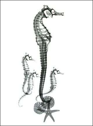 74 best images about seahorses on Pinterest