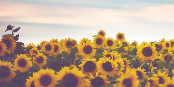 Fall Leaves And Pumpkins Wallpaper Sunflower Twitter Header Twitter Pinterest Follow Me