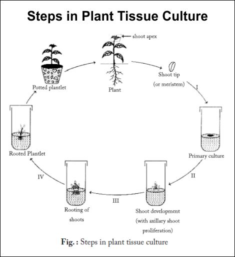 105 best images about Tissue culture micropropagation on