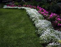 Perennial Border Edging Plants | plant used all along the ...