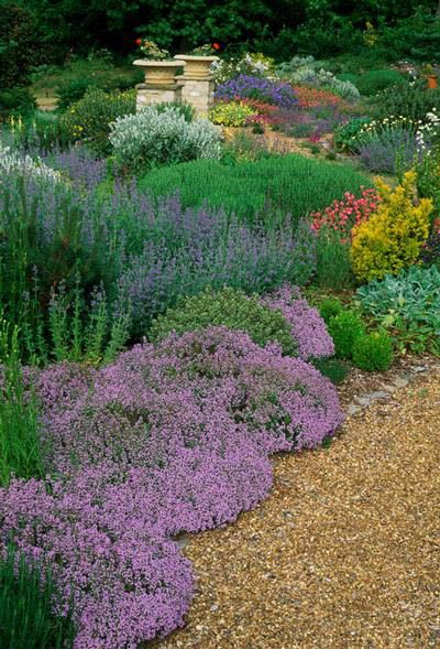 134 Best Images About Groundcovers On Pinterest Shade Garden
