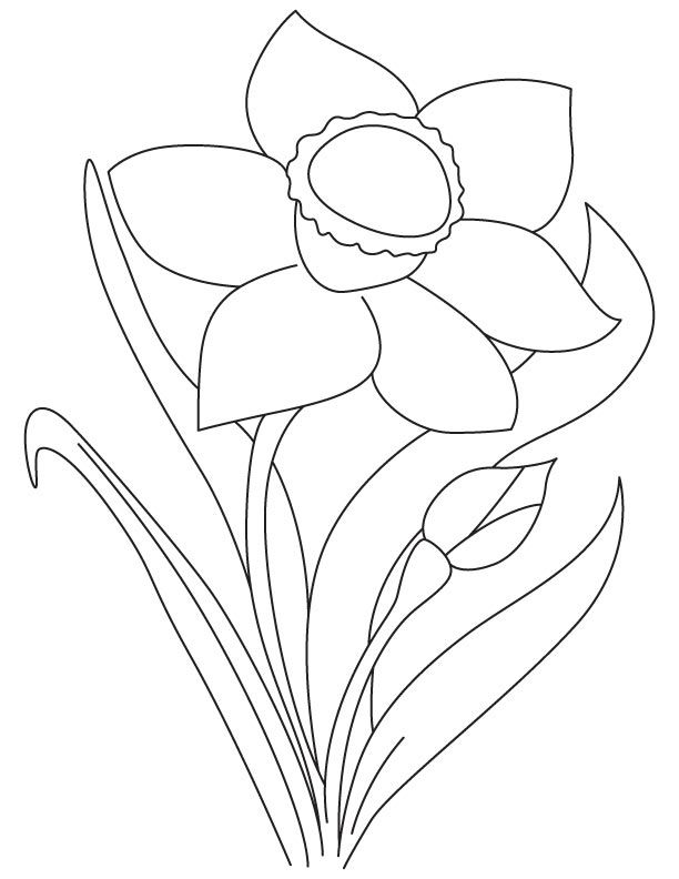 Yellow Daffodil Coloring Page