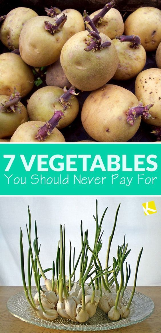 Vegetables You Should Never Pay For