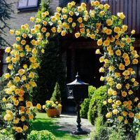 Rose pergola | Flower garden | Pinterest | Arbors, We and ...