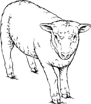 132 best images about Drawing Sheep on Pinterest