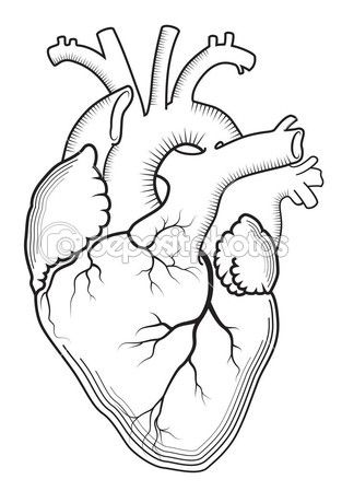 1000+ ideas about Anatomical Heart Tattoos on Pinterest