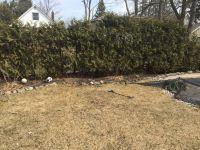 A big (barren) backyard needs some TLC | My Dream Backyard ...