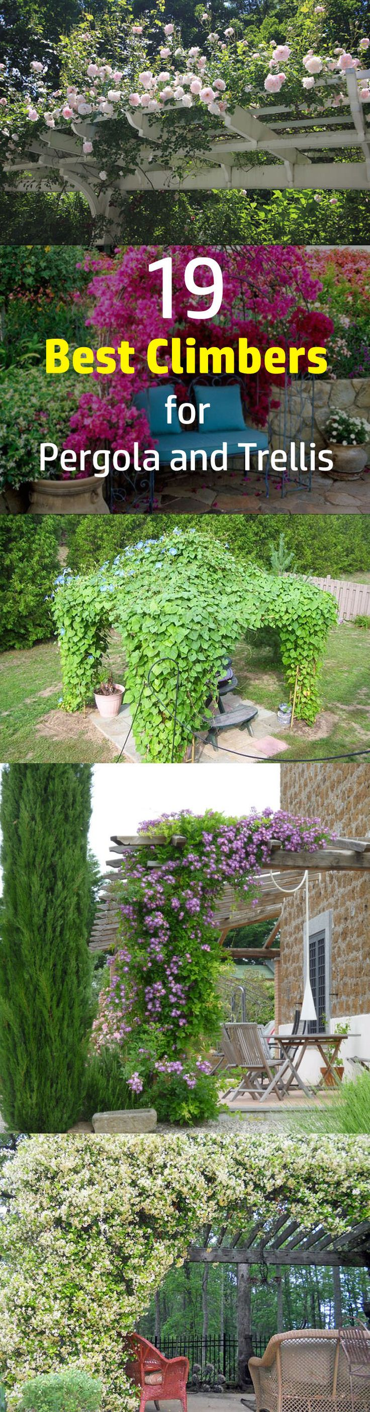 25 Best Trellis Ideas On Pinterest Diy Trellis Trellis And