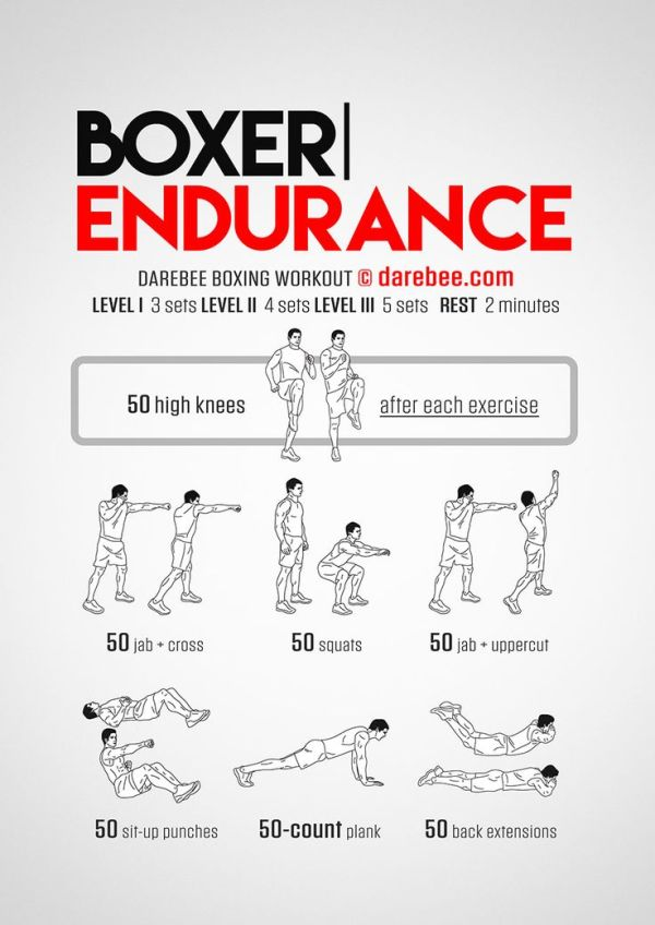 Boxer Endurance Workout Concentration Full Body