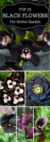 Best 20+ Gothic Garden ideas on Pinterest | Gothic flowers ...