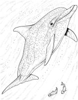 Bottlenose Dolphin Coloring Pages   Free Dolphin Coloring ...