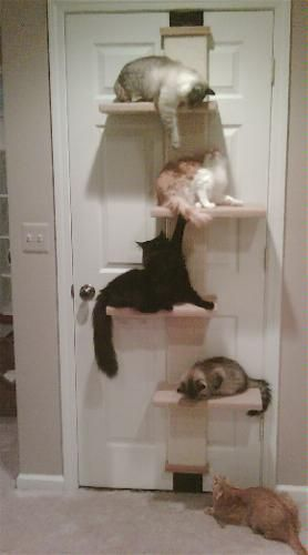 Lack the space but want a kitty perch…here's an idea!