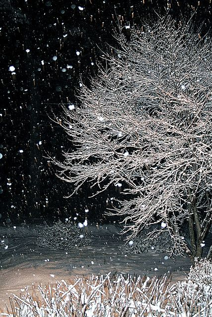 Beautiful Snow Falling Wallpapers 1000 Images About World Most Beautiful Snow On Pinterest