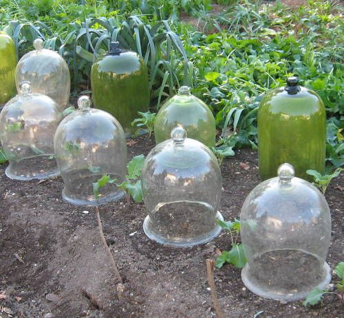 129 Best Images About GARDEN Cloche On Pinterest Gardens