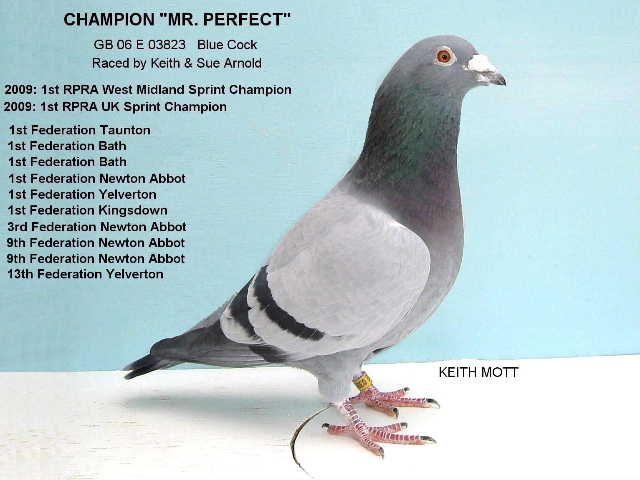 Image result for Pigeon intelligent animal