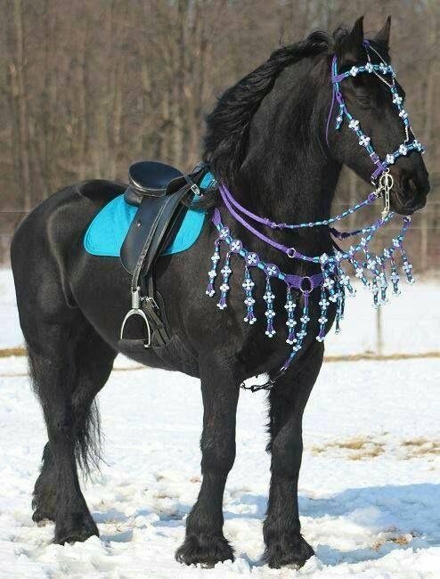 25 best ideas about Black horses on Pinterest  Pretty