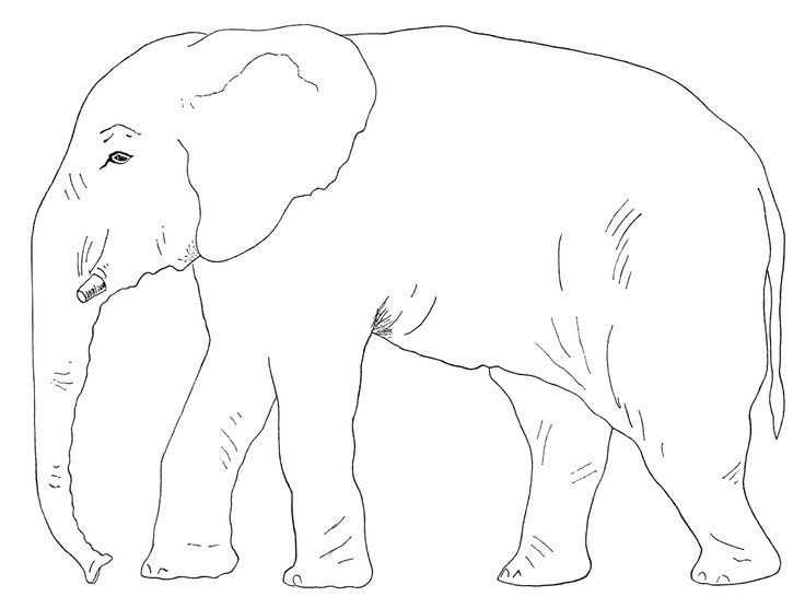 17 Best images about Coloring Pages For Kids on Pinterest
