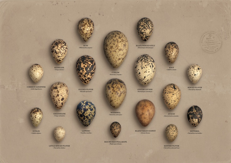color schemes for living room with brown couch colors grey speckled eggs chart.   things - egg pinterest british ...