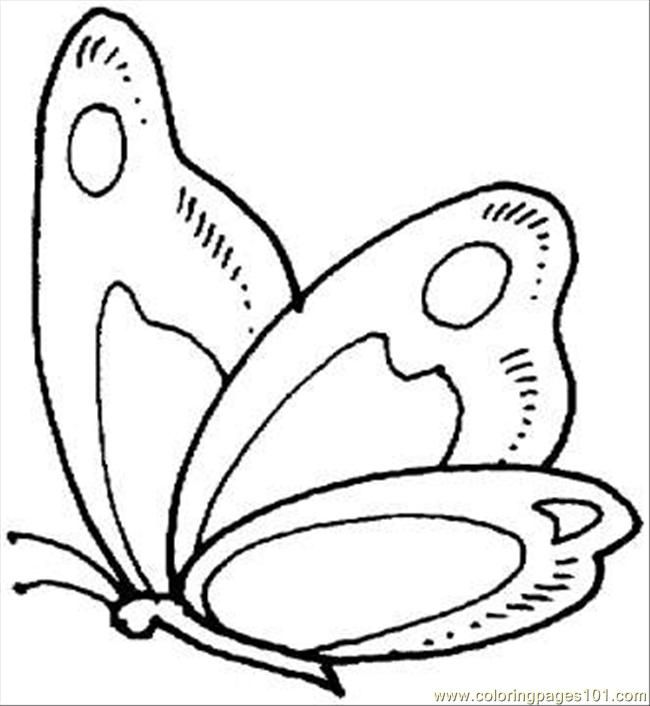 226 best images about § butterfly § on Pinterest