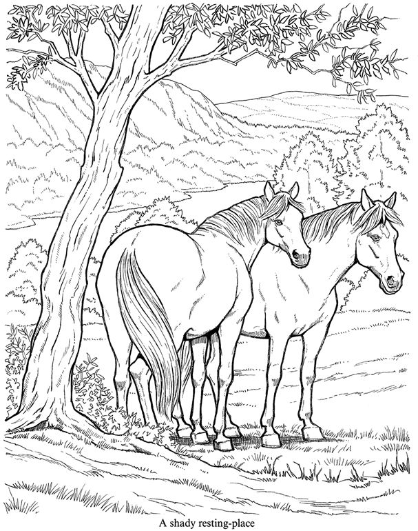 25+ best ideas about Horse Coloring Pages on Pinterest
