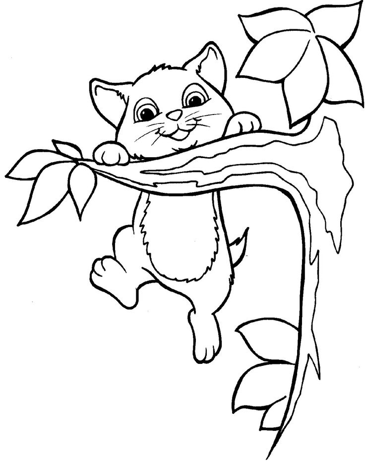 584 best images about Cats to color on Pinterest