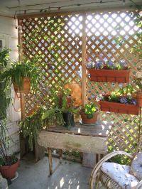 Garden Trellis for Condo Balcony Privacy??? | garden ...