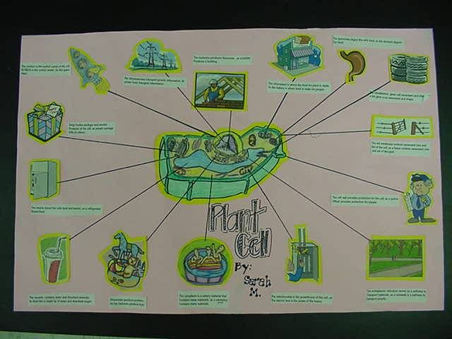 7th grade cell diagram stihl ms 440 parts mr. mohn's biology home turf - analogies collage project. | cells pinterest plants ...