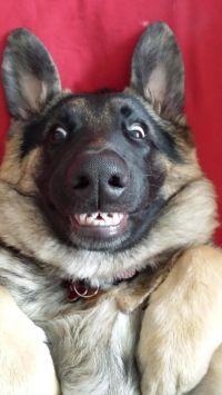 25+ best ideas about Spider dog on Pinterest | Cute ...