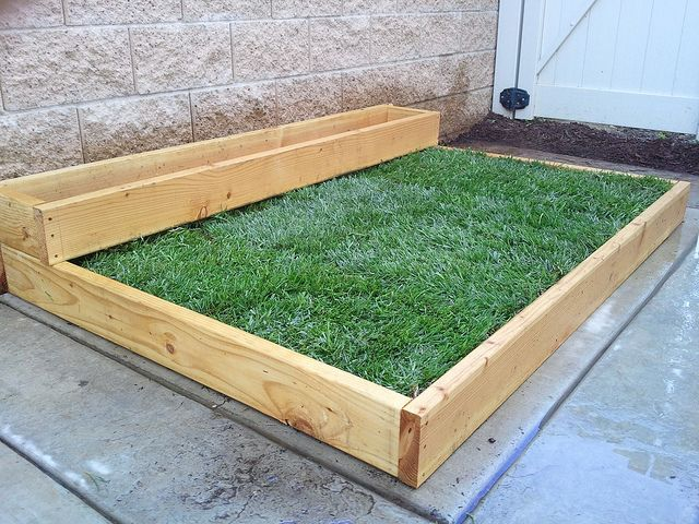 Planting Grass on Concrete  Part 1  Planters The daisy