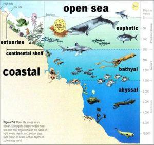 23 best images about Open Ocean on Pinterest   Food webs