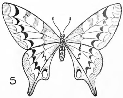 25+ best ideas about Easy butterfly drawing on Pinterest