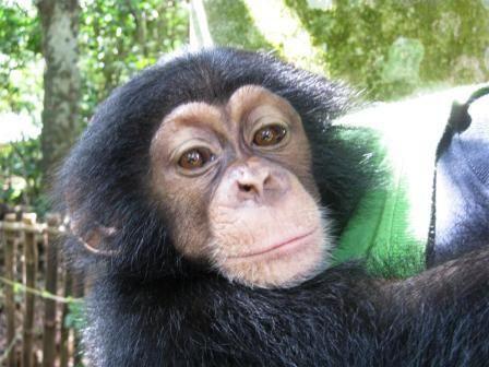 Sad Monkey Face