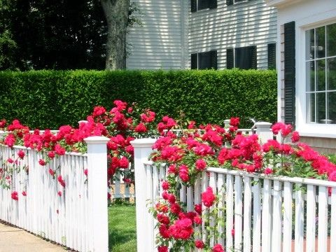 25 Best Ideas About Picket Fences On Pinterest Picket Fence