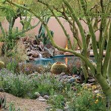 25 Best Ideas About Desert Landscaping Backyard On Pinterest