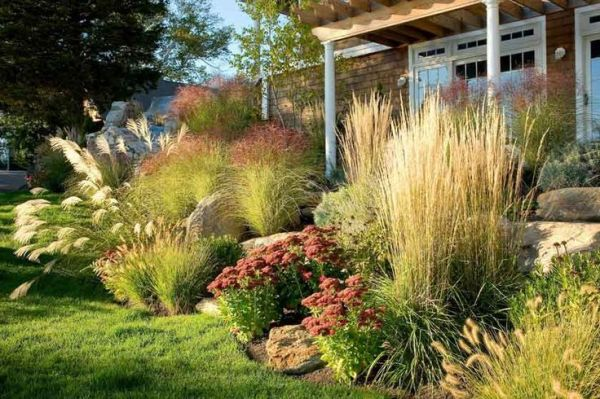 1000 ideas ornamental grasses