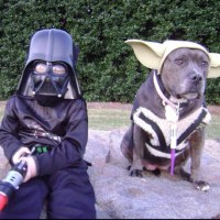 How cute is this?! Nanny dog for sure :)   Pit Bulls ...