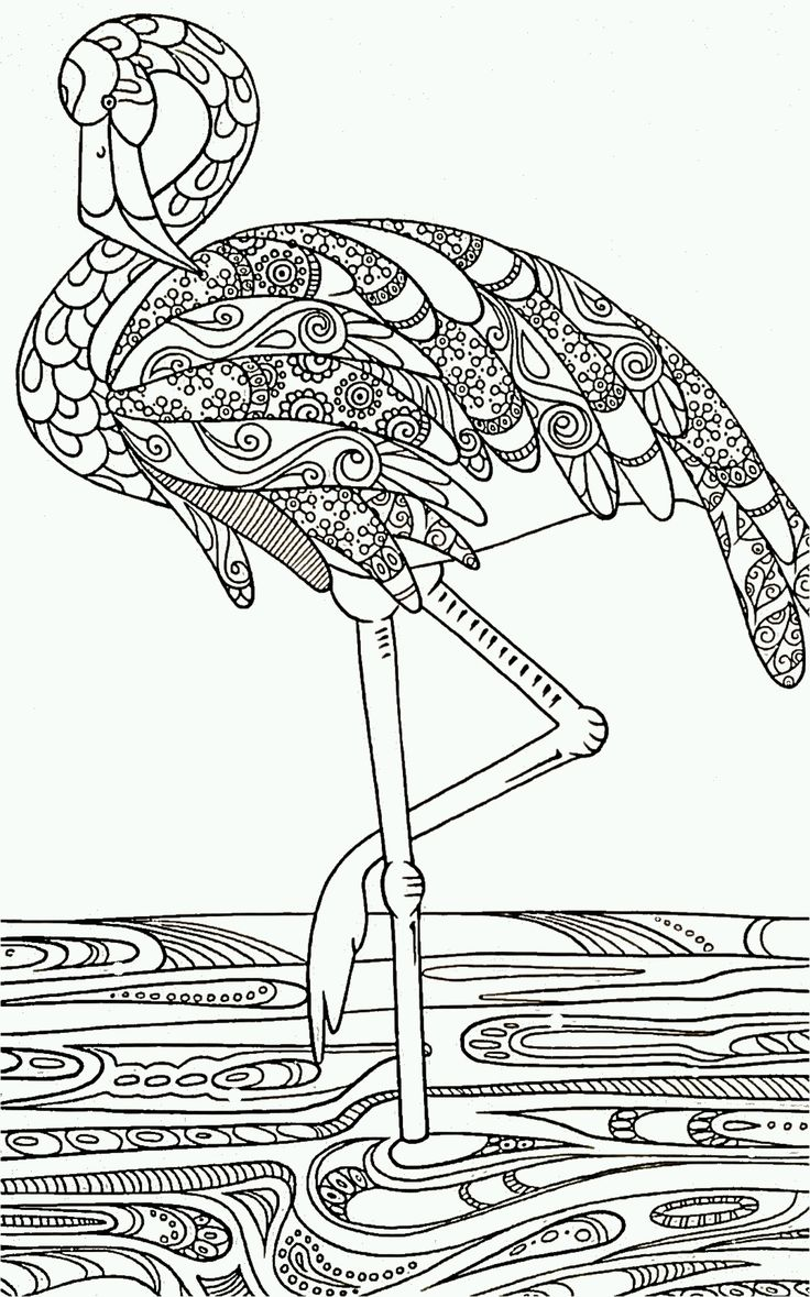 Flamingo color page black and white drawing outline for
